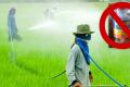 ศาลเลื่อนไต่สวนนัดแรก คดีเกษตรกรยื่นฟ้องบริษัทนำเข้าและจำหน่ายสารเคมี  เหตุทนายบริษัทสารเคมีทำคำร้องคัดค้านไม่ทัน